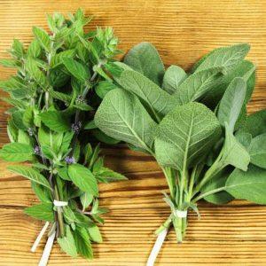<h1>Hierbas – Herbs</h1>