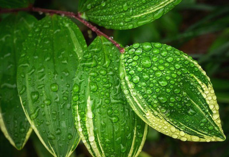 Magia verde: El poder de las plantas