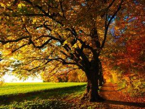 Los mejores rituales para el comienzo de otoño